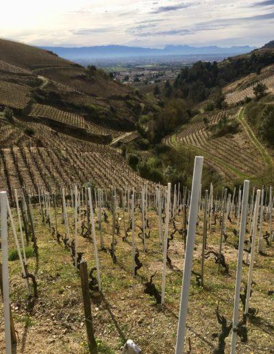 On s'occupe du Vin vigne 3