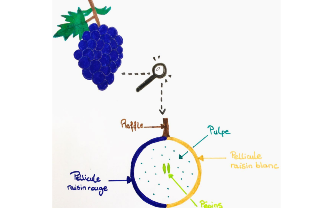 On s'occupe du Vin, vin BIO, vin nature